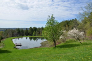 707380-Dufferin-County-Rd-21-large-012-5-South-Pond-1500x994-72dpi